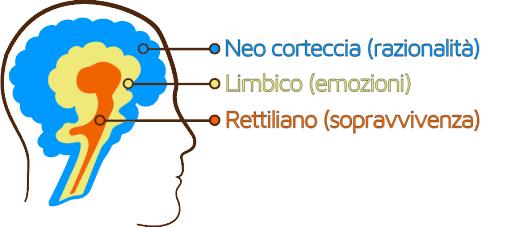 tre-cervelli1